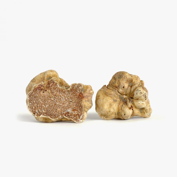 White Truffle from Italy - Tartuber